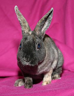 My bunny Piper